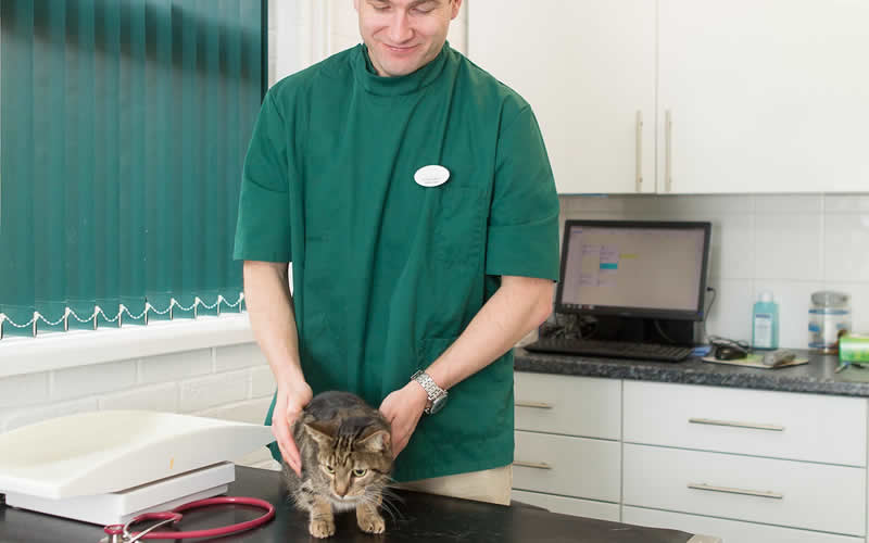 Consultation with vet at Chandlers Ford Vet Surgery