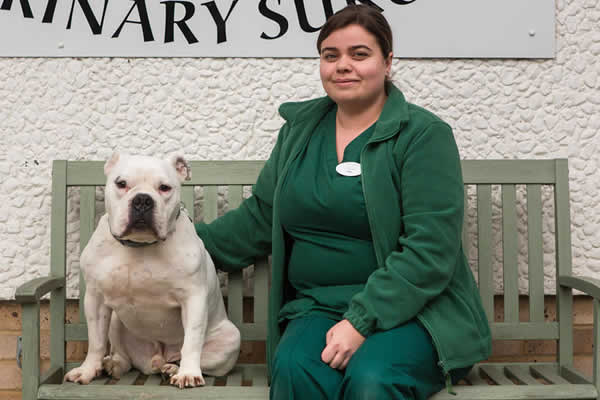 Chandlers Ford Vets